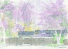 しだれ桜2.jpg