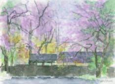 しだれ桜3.jpg