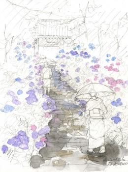 雨の紫陽花2.jpg