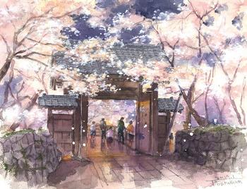takatou桜.jpg
